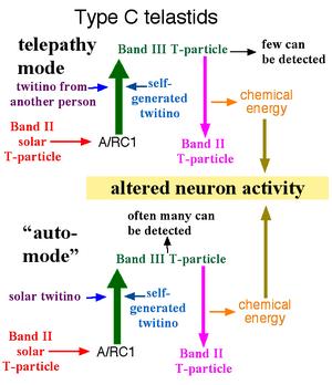 Type C telastid diagram 2