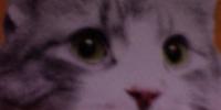 Unidentified Cat