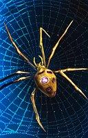 Spider dire