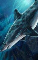 Animal shark mako