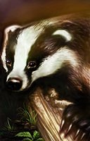 Animal badger