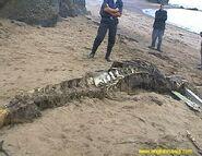 SeaWolf5