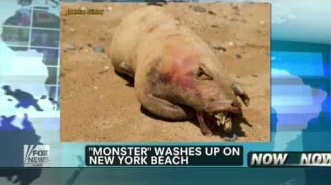 "New ""Montauk Monster"" Washes Up On New York Beach"