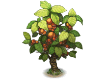 File:Coffee tree.png