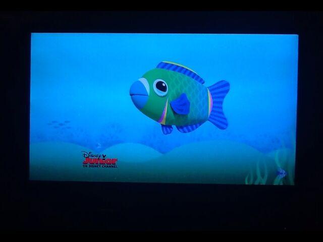 File:Parrot Fish Pete.jpg