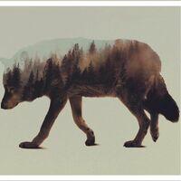 Wolf DP