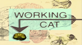 Working Cat Title