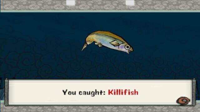File:Killifish.jpg