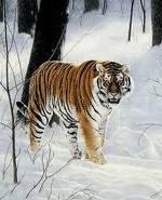 File:Tigersnow.jpg