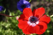 Alive Flower