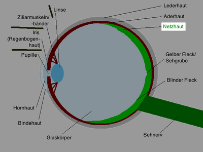 Auge Schemazeichnung deutsch Netzhaut