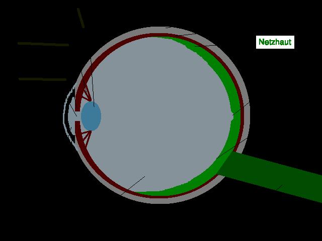 File:Auge Schemazeichnung deutsch Netzhaut.png