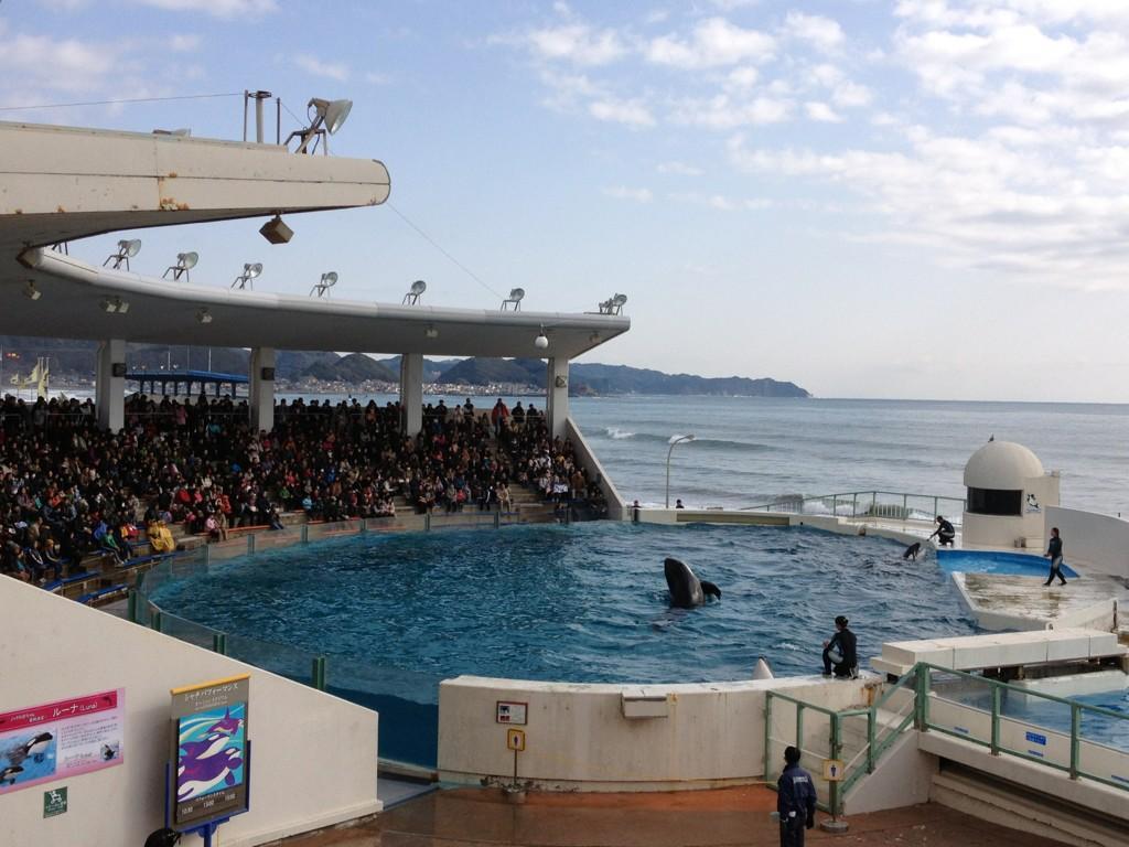 Kamogawa Sea World  Orca Pod Wiki  FANDOM powered by Wikia