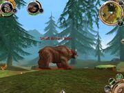 Order chaos bear