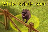 White bristle boar