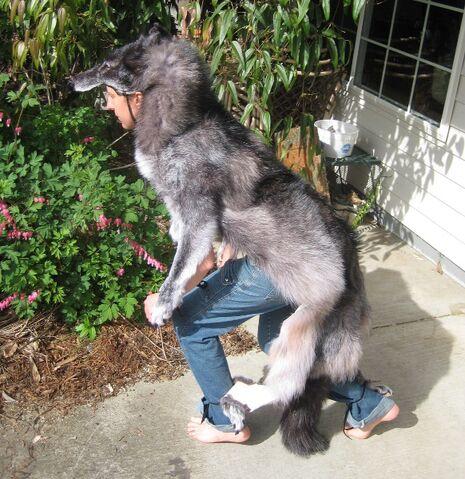 File:Wolf Skin Ritual 6 by lupagreenwolf.jpg