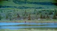 AlaskaSpiritWild 004