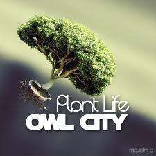File:Plant Life..jpg