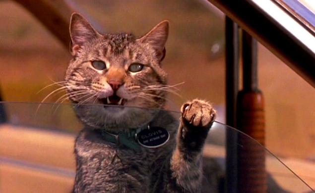 Stephen King's 1992 Film 'Sleepwalkers' is Insane - The ...