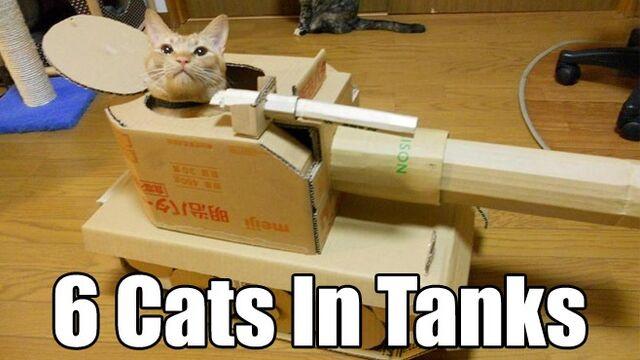 File:Catts.jpg