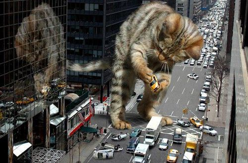 File:Giant kitty 01.jpg