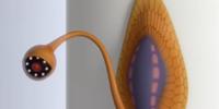 Slug Cam