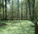 Forêt Hercynienne