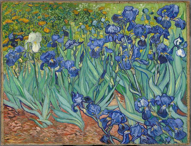 File:Irises.jpg