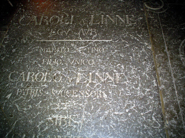File:CarlvonLinne gravestone.jpg