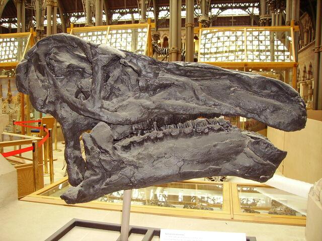 File:Iguanodon skull.JPG