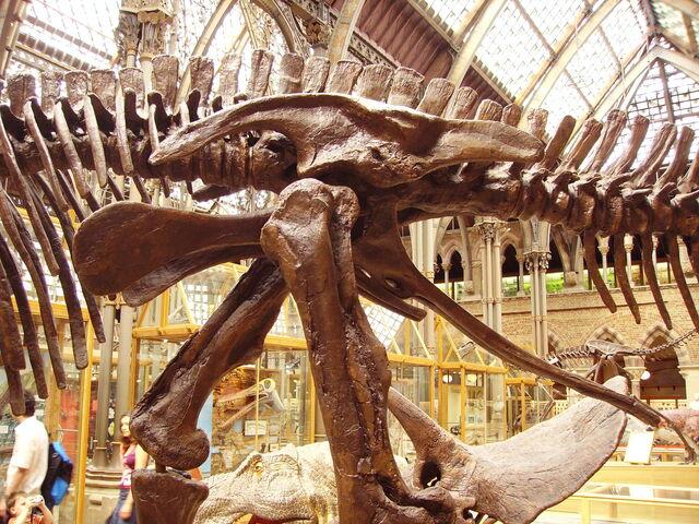 File:Edmontosaurus pelvis left.jpg