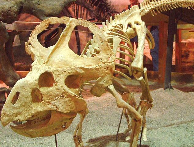File:Protoceratops.jpg