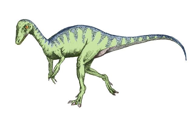 File:Eopraptor sketch5.png