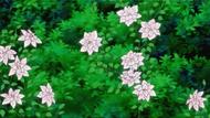 Ep01 - flowerz