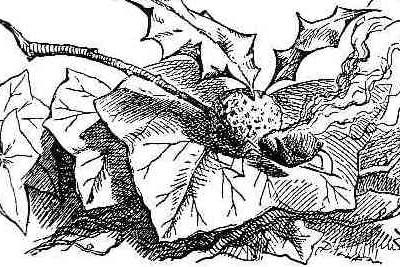 Datei:Snap-Dragon-Fly.jpg