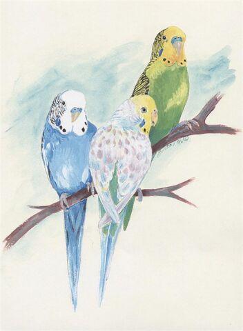File:Parakeet Painting.jpg