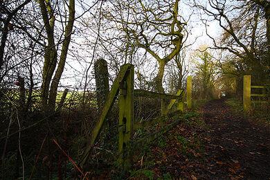Bradley-woods