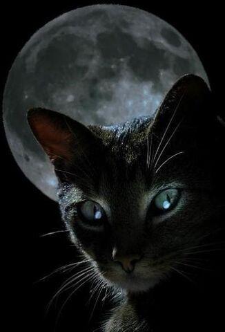 File:Chrystals cat.jpg