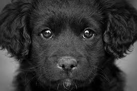 File:Doggy 2.jpg