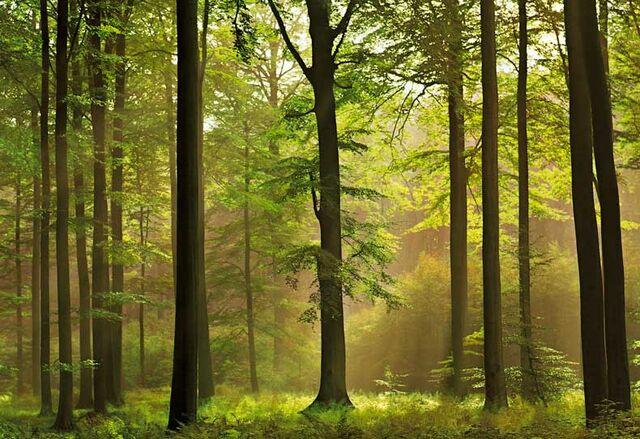 File:Forest???.jpg