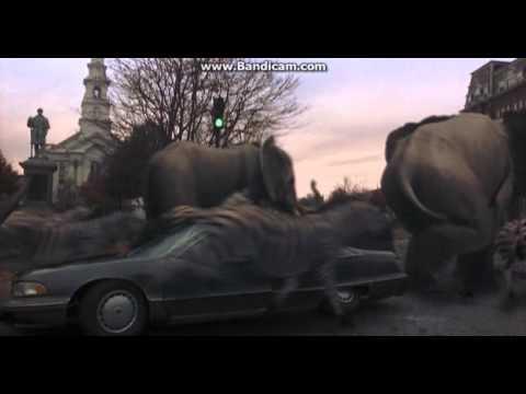 Rhinoceros Elephants And Zebras The Parody Wiki