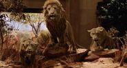 NatM Lions