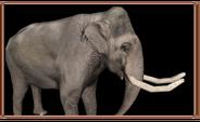 Elephas hysudrindicus