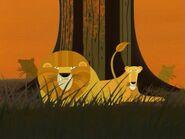 SJ Lions