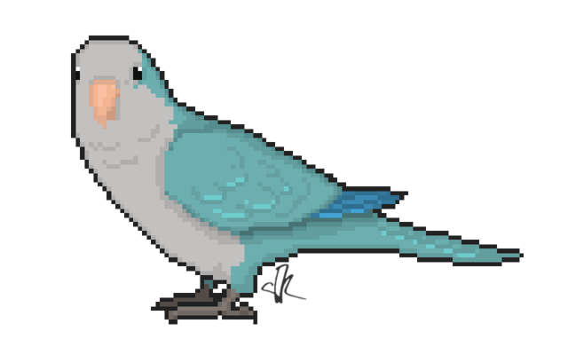 File:Wikia-Visualization-Add-1,parrots.png