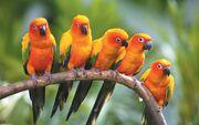 Parrot-wallpaper-3d (1)