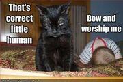 Bowandworshipme