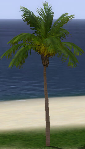 File:QueenPalm.jpg