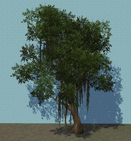 File:Banyan.jpg