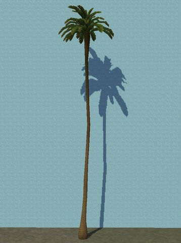 File:ExtraTallPalm.jpg